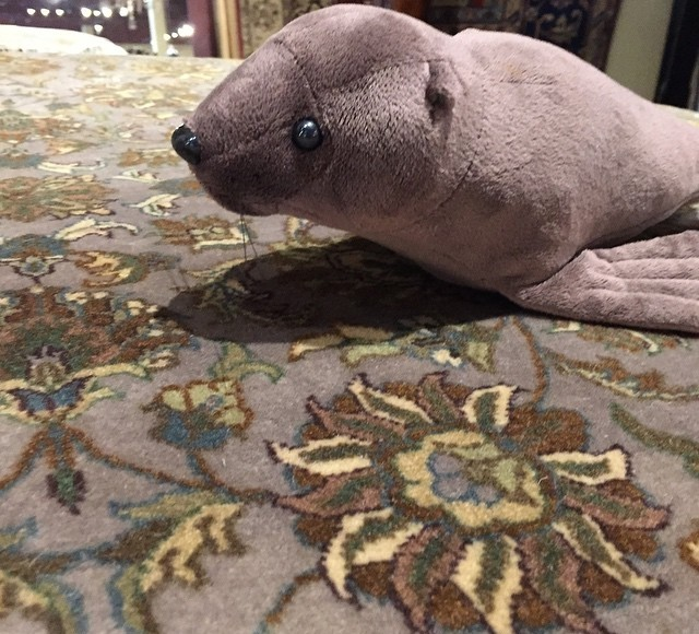 You Might Just See My Son S Seal Pop Up On Rugs He Is Carrying A
