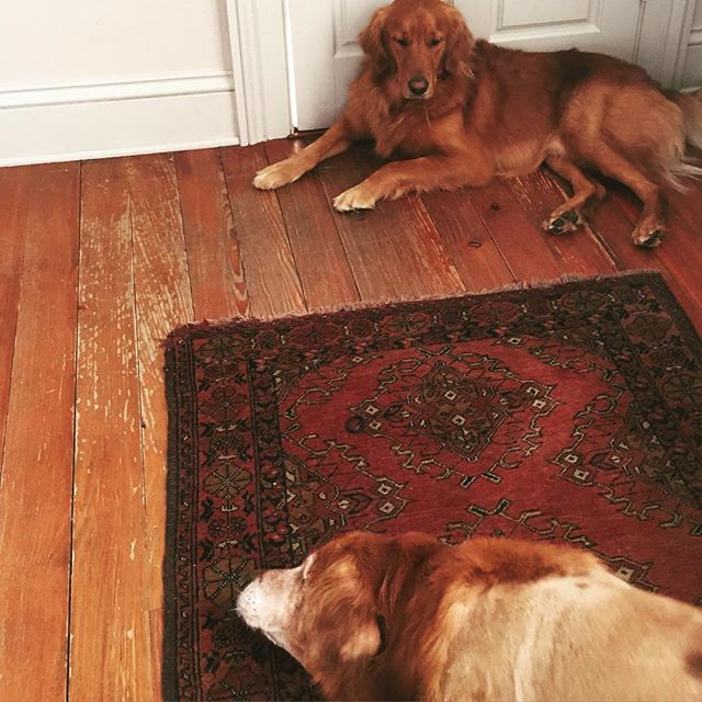 Family Dogs On Hand Knotted Rugs- Both Can Be Seen